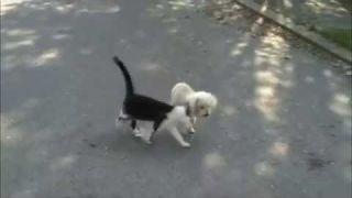 Gatto aiuta il cane cieco a percorrere la strada